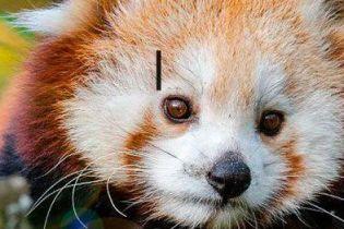10 лучших видео дикой природы