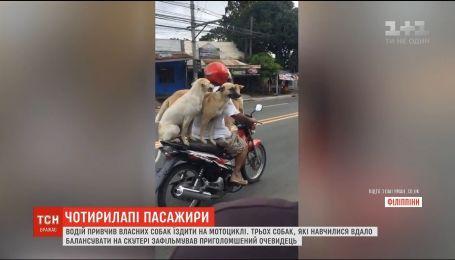 На Филиппинах водитель приучил собак ездить на скутере