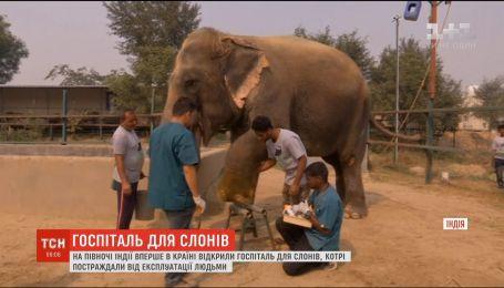 В Індії відкрили перший госпіталь для слонів