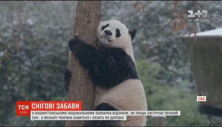 В Вашингтоне работники зоопарка сняли, как панда играет в снегу