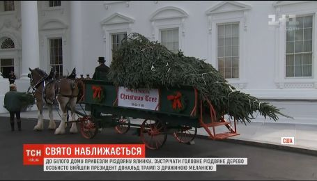 Підготовка до Різдва: до Білого Дому привезли ялинки