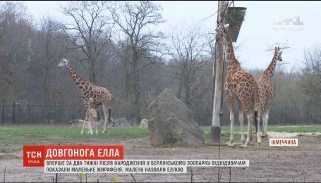В берлинском зоопарке посетителям показали новорожденного жирафа