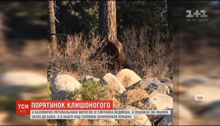 Спасение медвежонка: в Калифорнии маленький хищник застрял в помойке