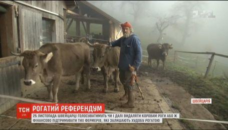 """""""За гідність худоби"""": швейцарці вирішують, чи залишати коровам роги"""