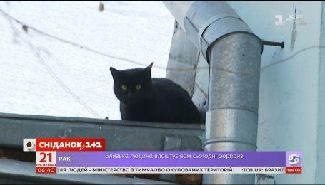 Спаси Чучу: как пожарные спасали кота, который месяц не может слезть с крыши