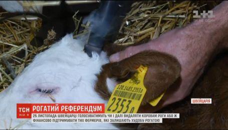 Швейцарцы организуют референдум, чтобы решить, удалять ли коровам рога