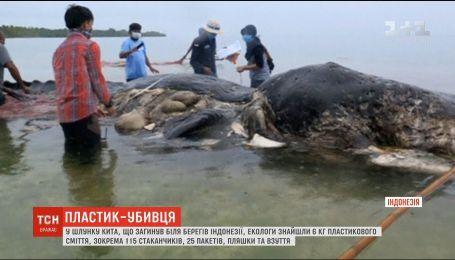 У шлунку кита, що загинув в Індонезії, біологи знайшли 6 кілограмів сміття