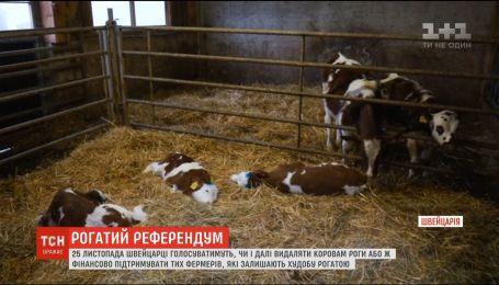 Швейцарские активисты предлагают выделять фермерам 200 долларов на каждую рогатую корову