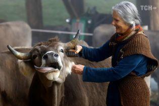 В Швейцарии на референдуме решат, нужно ли коровам удалять рога