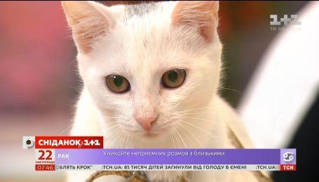 Беленькая кошечка Мася ищет заботливую семью