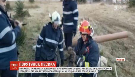 У Румунії пожежники визволили з колодязя крихітного песика
