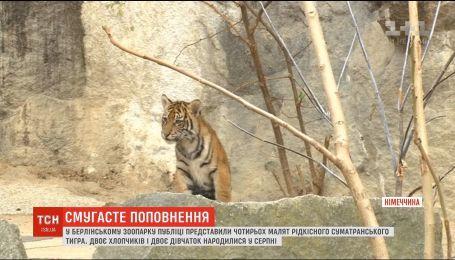 У зоопарку Берліна показали рідкісних суматранських тигренят