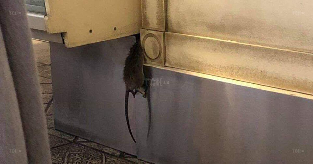 Крыса повесилась. В Киеве в пекарне посетители сфотографировали ужасную находку под прилавком