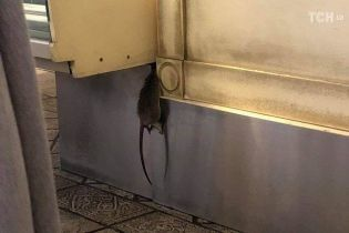 Щур повісився. У Києві в пекарні відвідувачі сфотографували жахливу знахідку під прилавком