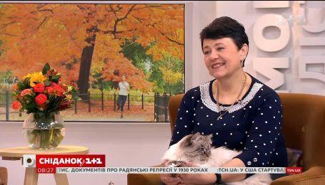 Як правильно підготувати кота чи кішку до виставки - експерт WCF Тетяна Дьячук