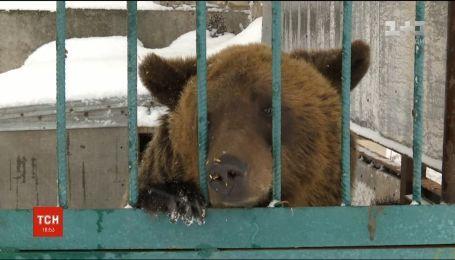 Житель Покровская за свой счет содержит брошенных медведей и львов