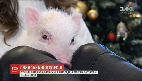Столичні фотографи купують міні-пігів для новорічних фотосесій