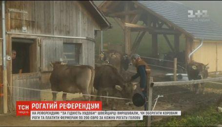 Швейцарцы на референдуме решили, стоит ли спиливать коровам рога