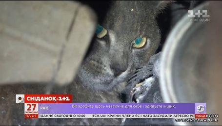 В Калифорнии спасли кота, который потерялся во время пожаров