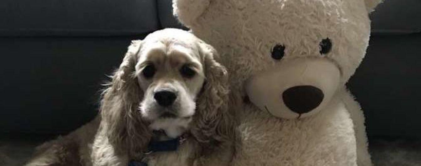 Сеть растрогало видео, где собака пристально следит за любимой игрушкой в стиральной машине