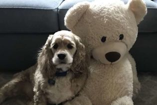Мережу зворушило відео, де собака пильно стежить за улюбленою іграшкою у пральній машині
