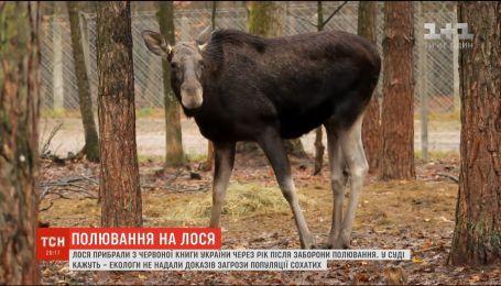 Суд викреслив лося з Червоної книги і дозволив на нього полювати