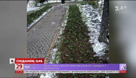"""Маргаритки под снегом: зачем """"Киевзеленстрой"""" высаживает деревья и цветы с началом морозов"""