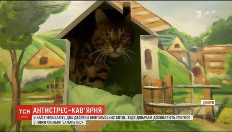 В Днепре открылось антистресс-кафе с котами