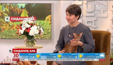 Особенности характера, ухода и подготовки к выставкам абиссинских кошек - Юлия Скабовская