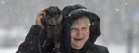 Жарти юзерів про потужний снігопад в Україні та відео з ніжним котиком, який любить обійми. Тренди Мережі