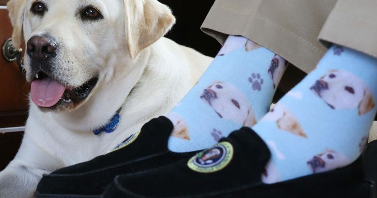 Шкарпетки  Джорджа Буша-старшого із зображенням Саллі @ instagram.com/sullyhwbush