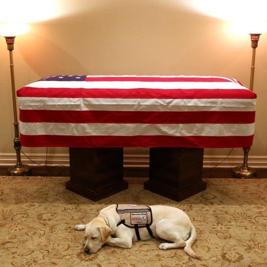 """""""Місія завершена"""". Собака Джорджа Буша-старшого зворушливо попрощався із ним біля труни"""
