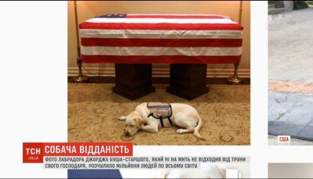 Фото собачки Джорджа Буша-старшего растрогало миллионы людей по миру