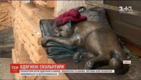 В Одесі після першого снігу утеплили скульптури котів