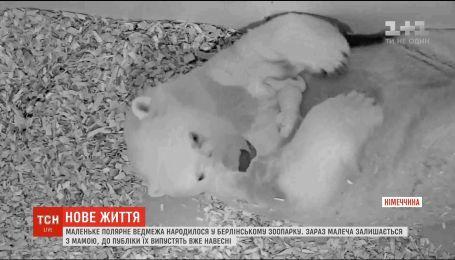 У берлінському зоопарку на світ з'явилося полярне ведмежа