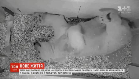 Полярный медвежонок родился в берлинском зоопарке