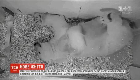 Полярне ведмежа народилося у берлінському зоопарку