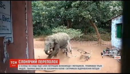 В индийском поселке слон потрощил имущество и травмировал трех человек