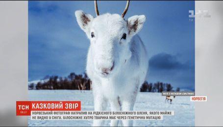 Норвежский фотограф случайно наткнулся на редкого белого оленя