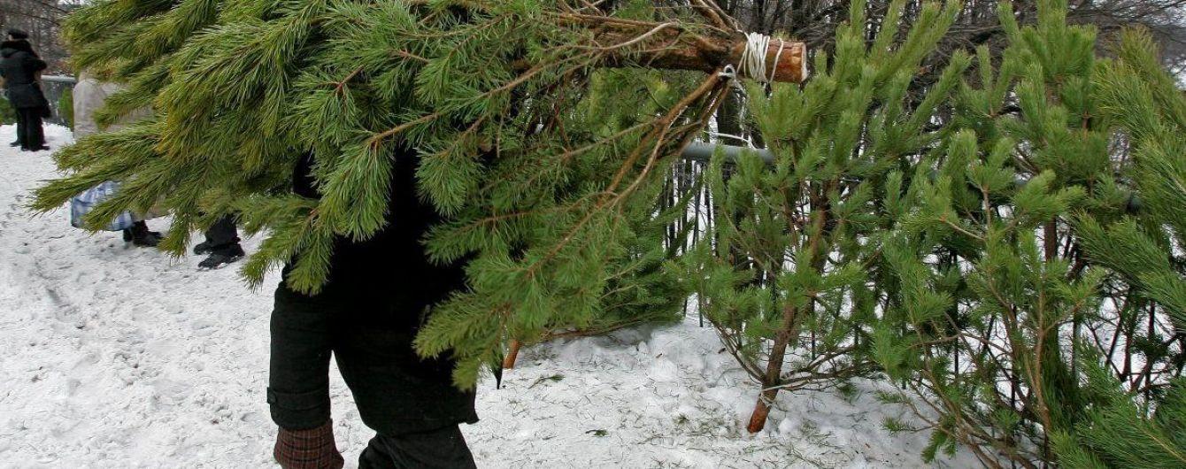 Нуждаются в празднике: украинцы заблаговременно бросились покупать новогодние елки