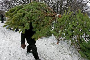В Киеве начали работу пункты по приему елок