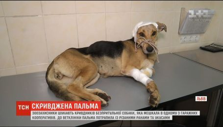 Обиженная Пальма: во Львове неизвестные жестоко поиздевались над бездомной собакой