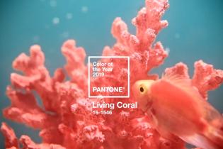 Коралловый цвет и клетка: стилисты и дизайнеры назвали тренды 2019 года