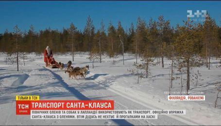 Транспорт Санта-Клауса. ТСН узнала подробности жизни животных в Лапландии