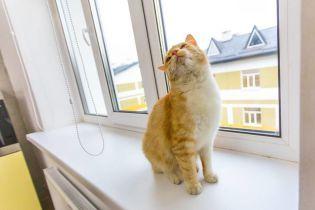 Порошенко впервые запостил кота в своем Facebook
