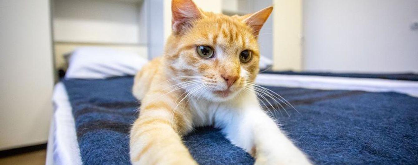 """""""Не любиш котиків? Сядеш!"""". Мережу насмішив кіт у Facebook Порошенка"""
