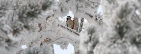 Метели и до 20 см снега, а на Западе – без осадков. Прогноз погоды на 12 декабря