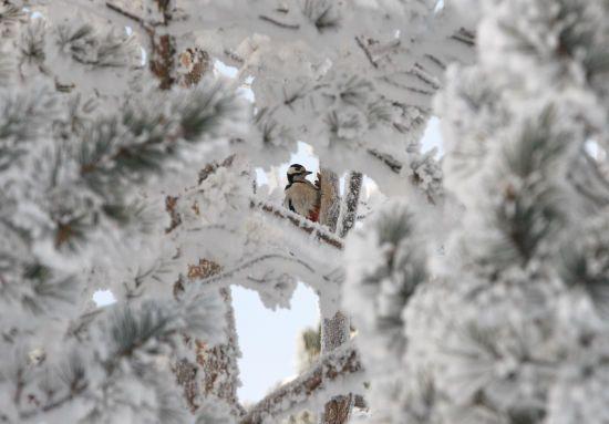 Морози відступають, а місцями сніг: погода на 21 грудня