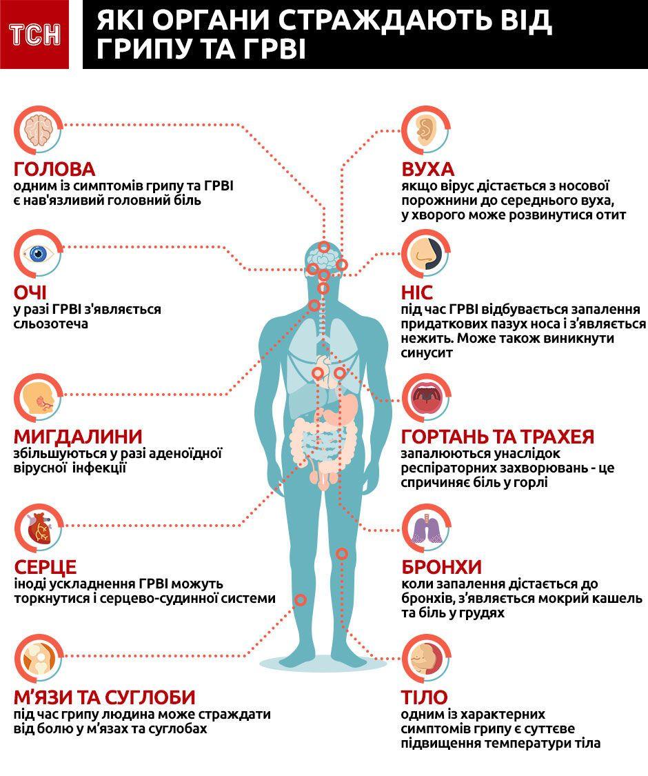 як грип та грві діють на організмі, інфографіка