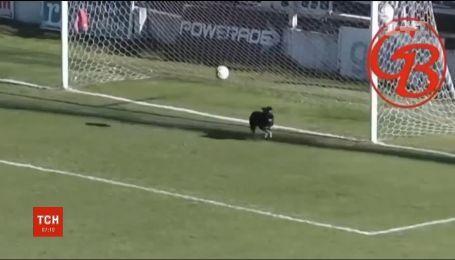 В Аргентині безпритульний пес врятував футбольну команду від безглуздого голу